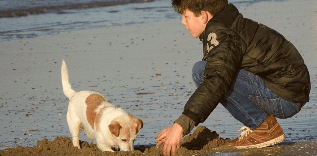 Boy and his dog playing on the beach